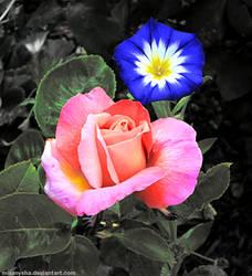 Roseglory by MissNysha