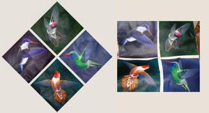 Hummingbird Series 2004 by MissNysha