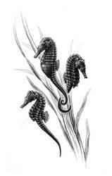 Prehensile tails - Seahorses by MissNysha