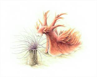 Nudibranch attack! by MissNysha