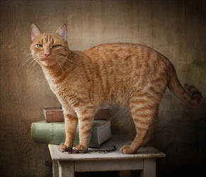 Cat  and  still life. by Csyyt