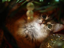 Christmas Kitty by GramMoo