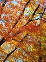 Fall Trees by GramMoo