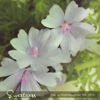 Sweetness by Sisterslaughter165