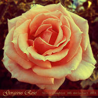 Gorgeous Rose by Sisterslaughter165