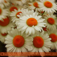 Chamomile by Sisterslaughter165