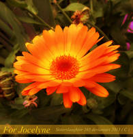 For Jocelyne by Sisterslaughter165