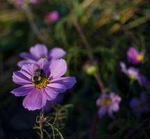 Quiet Meadow Bee by rachapunk