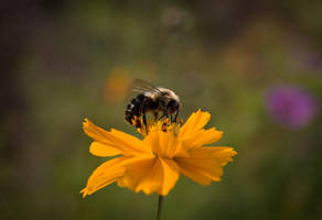 Nectar Siphoner by rachapunk