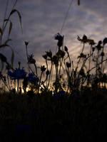 Waning Twilight by rachapunk