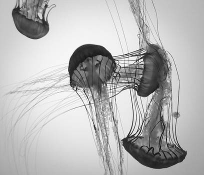Multiple Monochrome Jellyfish by rachapunk