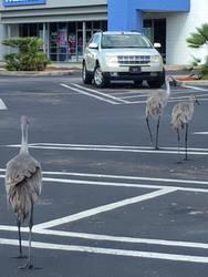 Story: Birding by cabridges