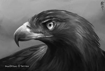 Study of golden eagle by kagesatsuki