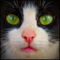 Cat by DoctaBoRk
