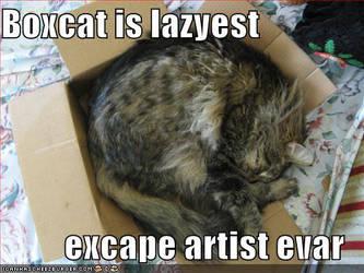 Boxcat 1 by CyberSkull