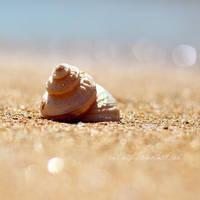 Seashore by Catlaxy