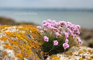 Ocean Blossom by Catlaxy