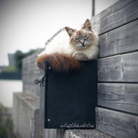 You've Got Mail by Catlaxy