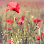 Red Garden by Catlaxy