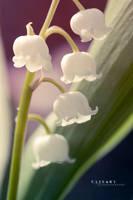 Little Lilies by Catlaxy