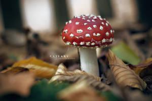 Super Mushroom by Catlaxy