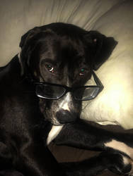 My Dog Ventress  by baquar