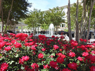 Red Flowers And Fountain  by baquar