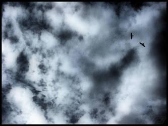 birds of prey by Gordanj