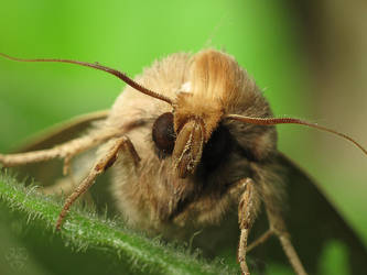 Moth 1 by Gordanj