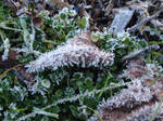 Frost's Haste by DreamAngelflight