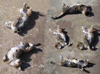 Cat show by kalbimsenin