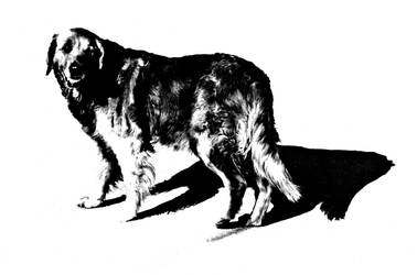 Dog by kalbimsenin