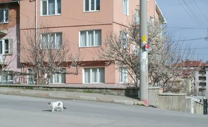 Cat by kalbimsenin