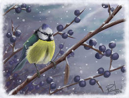 First snow - blue tit. by Emberiza