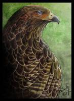 Red-tailed Hawk Portrait by Emberiza