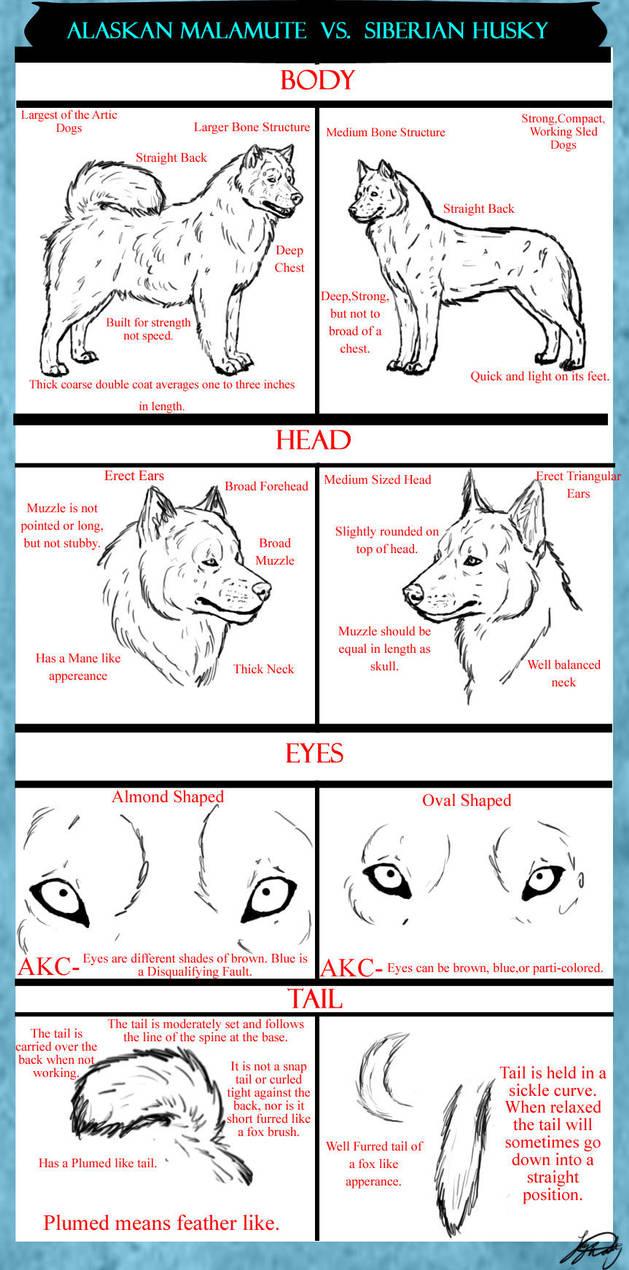 alaskan malamute vs siberian husky tutorital by vorpalbeasta on