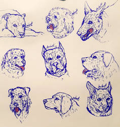 Morning Loose Ink Dog Breed Sketches by VorpalBeasta