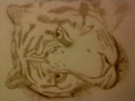 TIGER by Annisa-Rae
