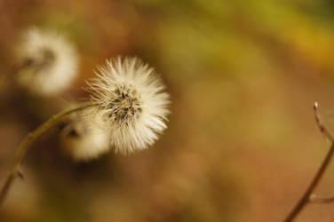 autumn by svww94