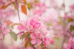 spring flower time by a-place4my-head