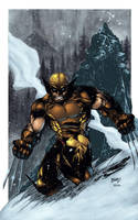 Medors' Wolverine colored by seanforney