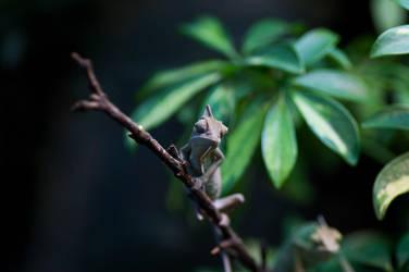 chameleon by Drugi