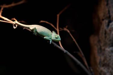 chameleon2 by Drugi