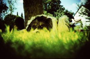 Hiding by Lomomaniac