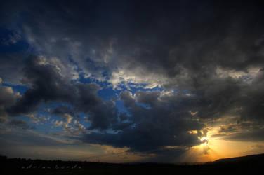 Rays by borda