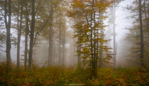 The Soft Veil of Beauty by borda