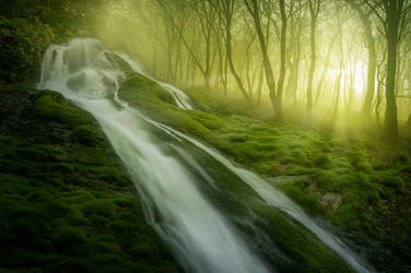Magic Forest by borda