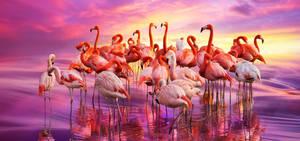 Flamingo dance by borda