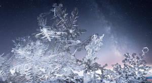 Fallen Stars by borda