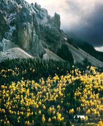 The Tulip Field by borda